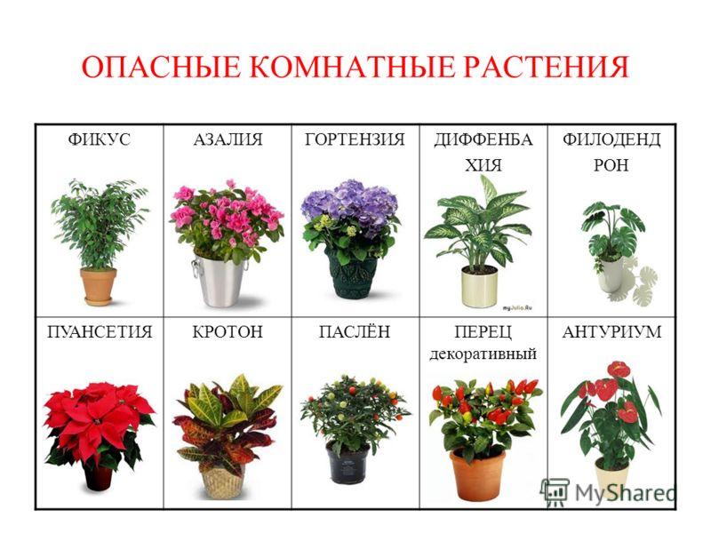 Комнатные цветы и растения и уход и